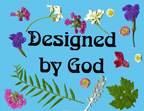 sunday school Designed By God bible craft