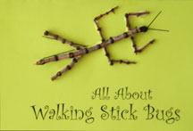 Walking Stick Book Craft