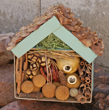 earth day Bug House Craft for kids