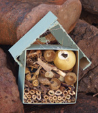 Bug house craft for kids 2