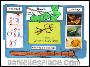 Walking Stick Lap Book from Bug Buddy Series from www.daniellesplace.com