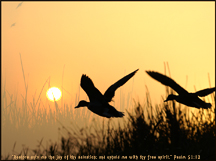 Christian Bible Verse Wallpaper - ducks and Sunset