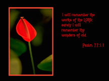 Christian Wallpaper Red Lily