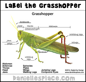 Label the Grasshopper Activity Sheet for Home School from www.daniellesplace.com