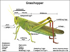 Grasshopper Activity Sheet