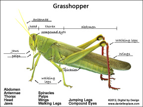Grasshopper Drawing With Label