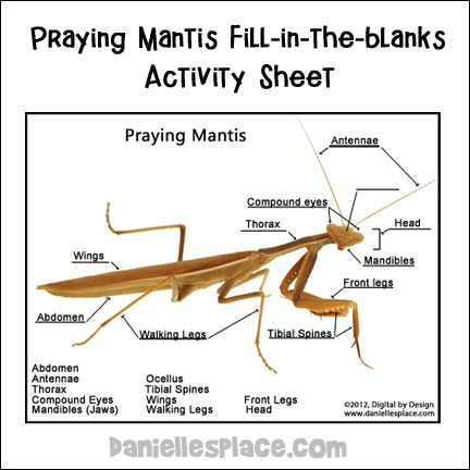 label the praying mantis activity sheet