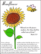 Sunflower Coloring Sheet for Sunday School for Beatitudes Lesson from www.daniellesplace.com