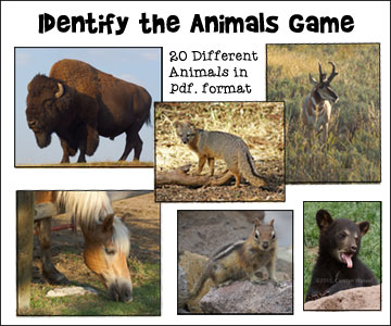 """Identify the Animals"" Noah's Ark Game from www.daniellesplace.com - 20 full-sized printable animal pictures in pdf format"