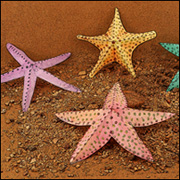 Paper Plate Crafts For Kids. Silly Starfish : paper plate starfish - pezcame.com