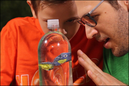 Make a fish dive and rise to the surface science craft and learning activity