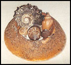 Sea Shell Paper Weight Craft